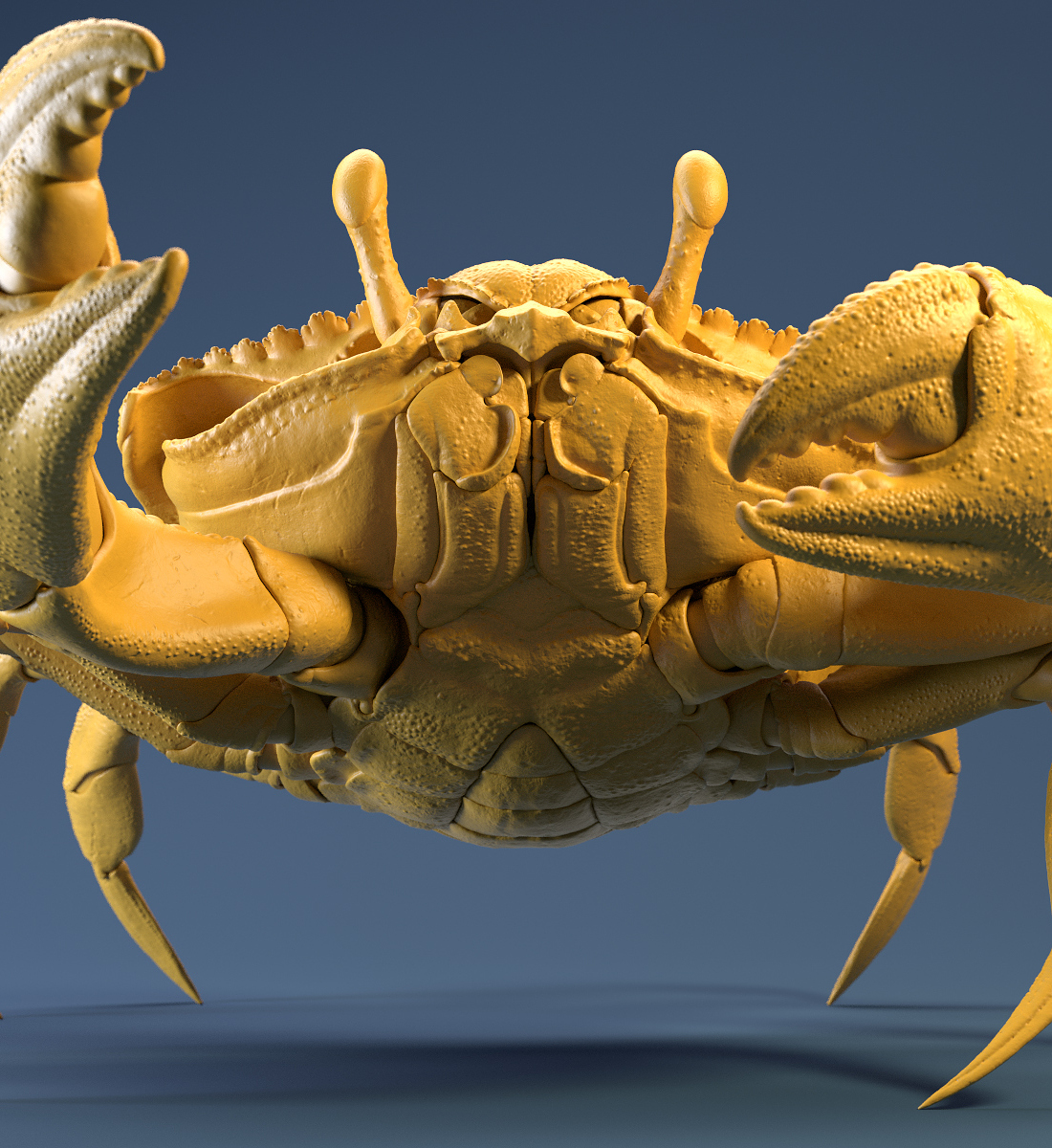 Crab_Yellow_Clay_Shot_02.jpg