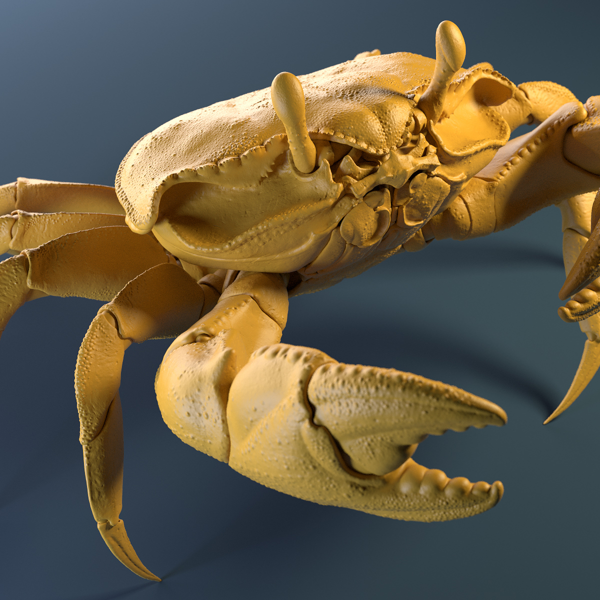 Crab_Yellow_Clay_Shot_04.jpg