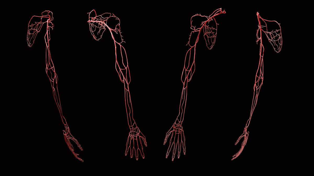 UpperLimb_FullArm_2020-07-15_Arteries