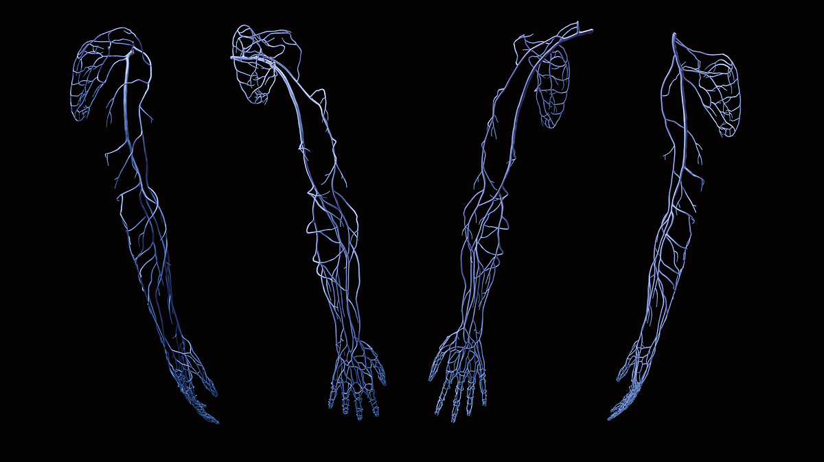 UpperLimb_FullArm_2020-07-15_Veins