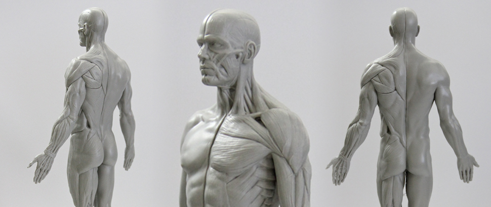 3dtotal_anatomy-figure_feature1.jpg
