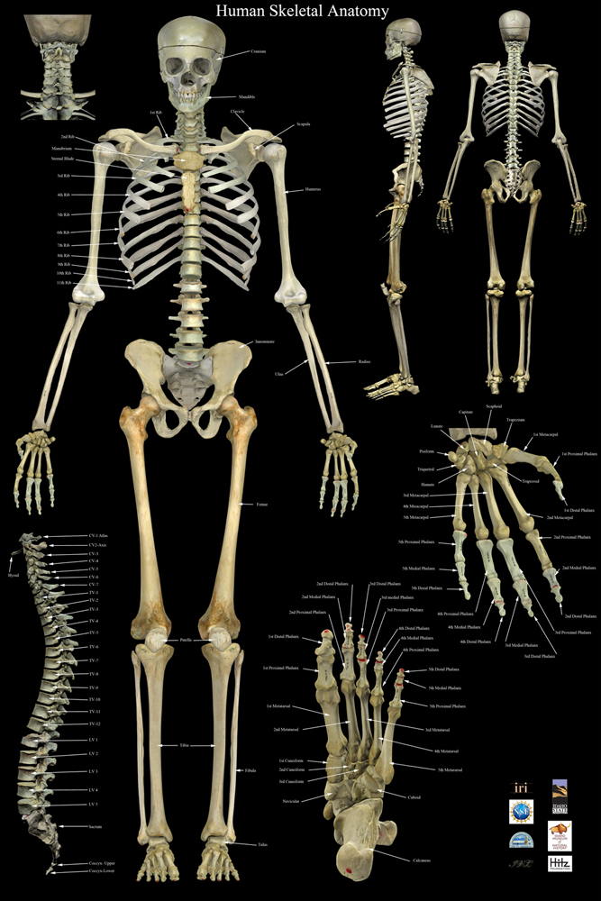 Skeleton-Final-low.jpg