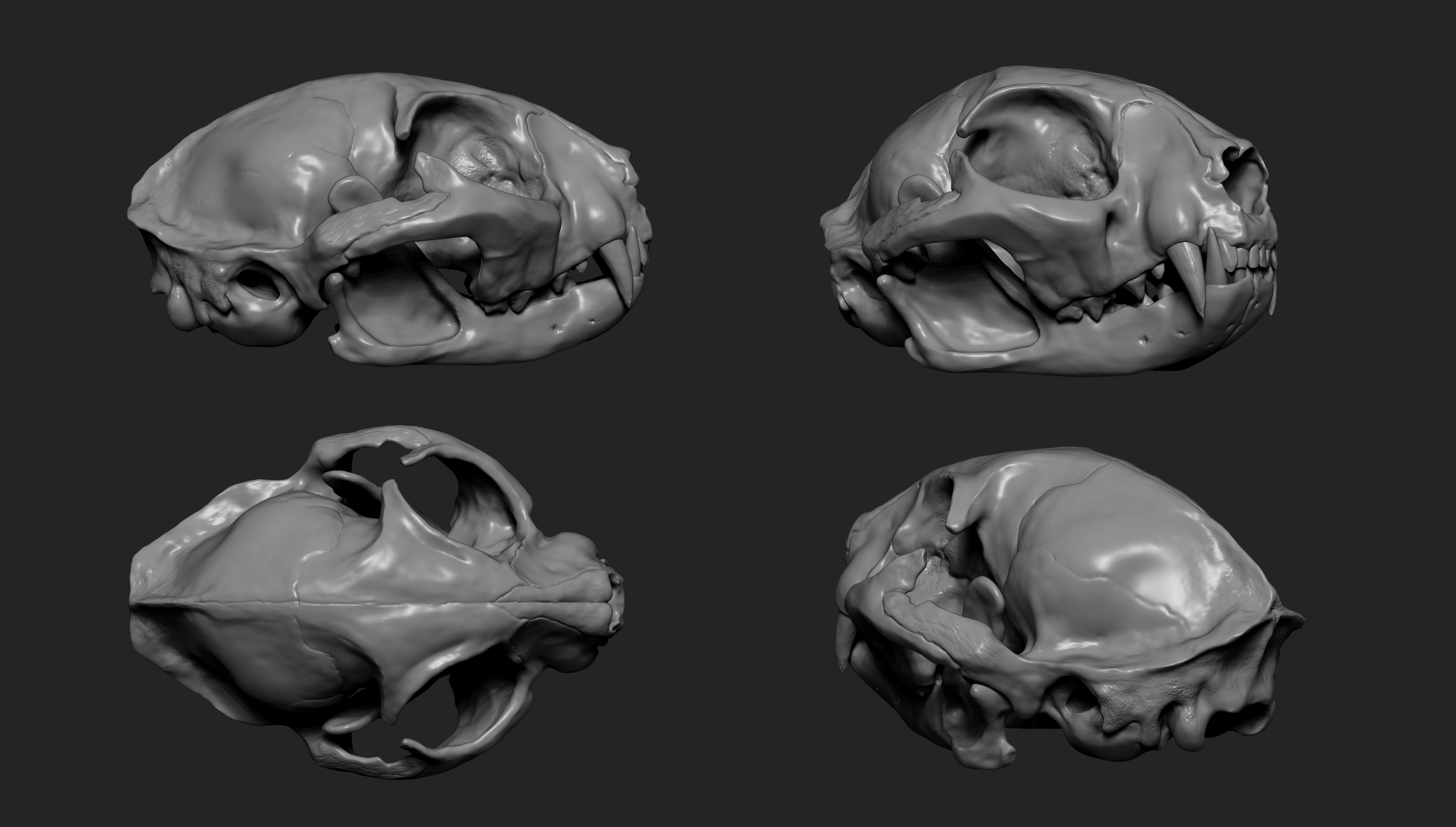 MarcusTrolldenier_SculptingAnatomy_week2_cat_skull_02.jpg