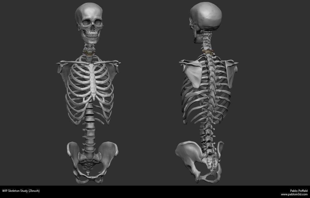 skeletonStudy.jpg