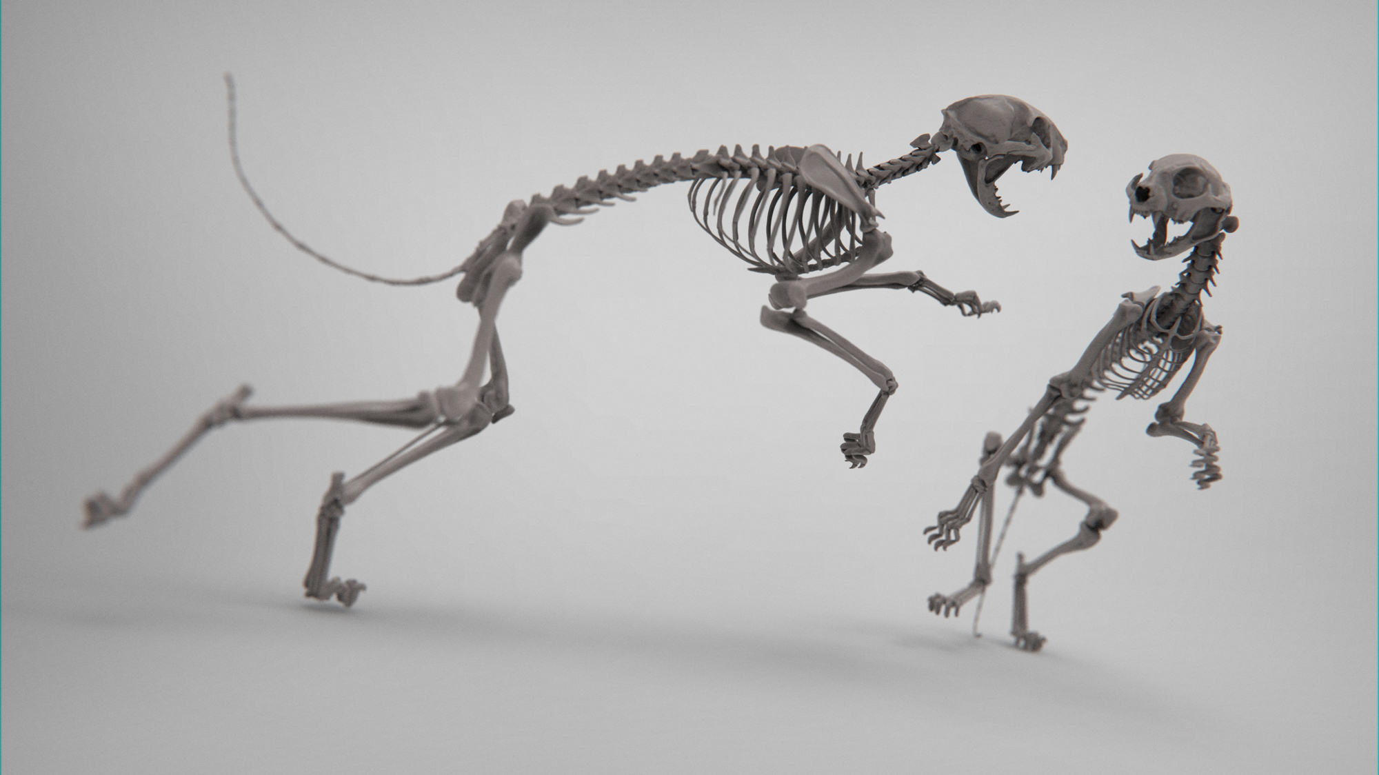 MarcusTrolldenier_SculptingAnatomy_week3_domestic_cat_15.jpg