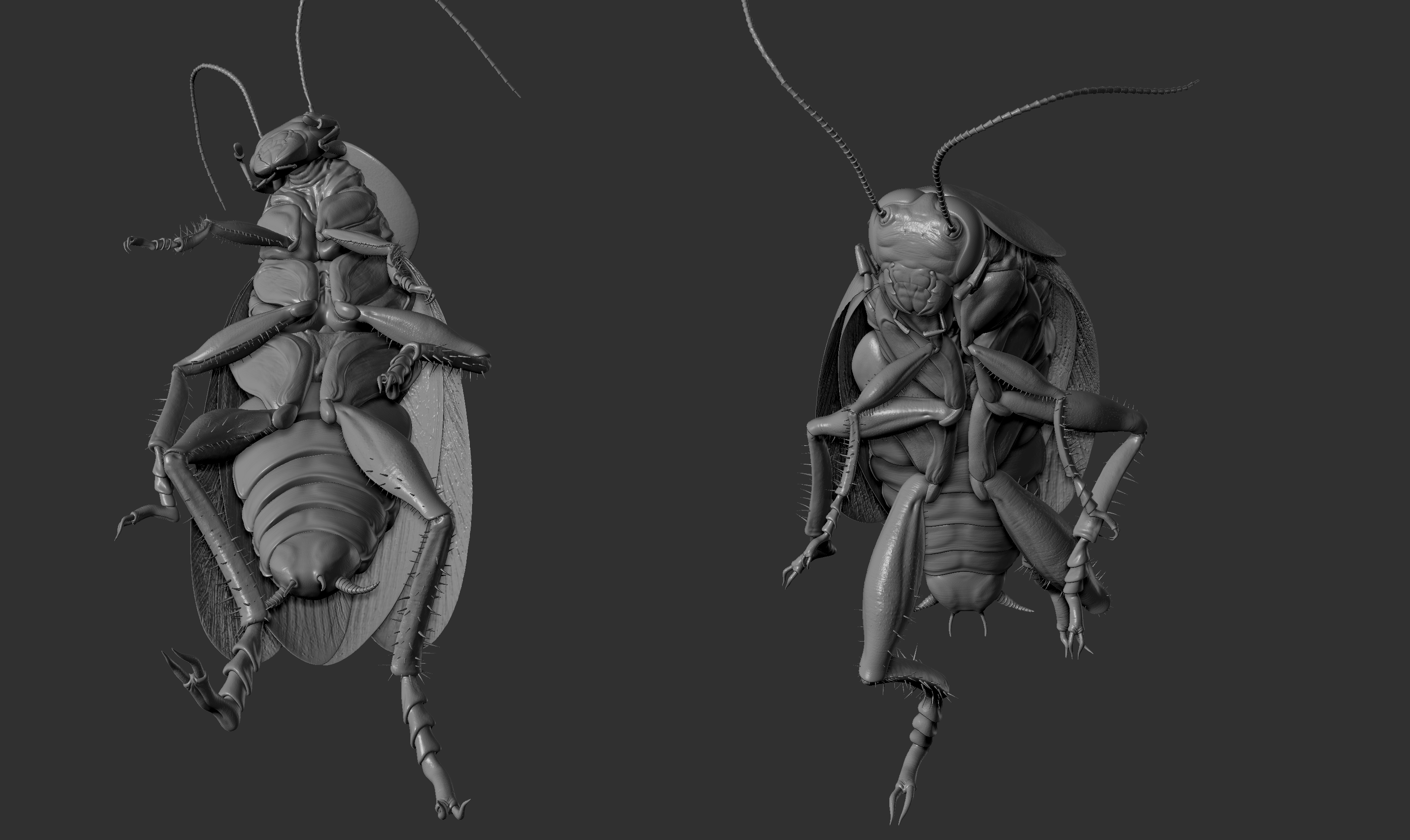 Cockroach-sculpture-03.jpg