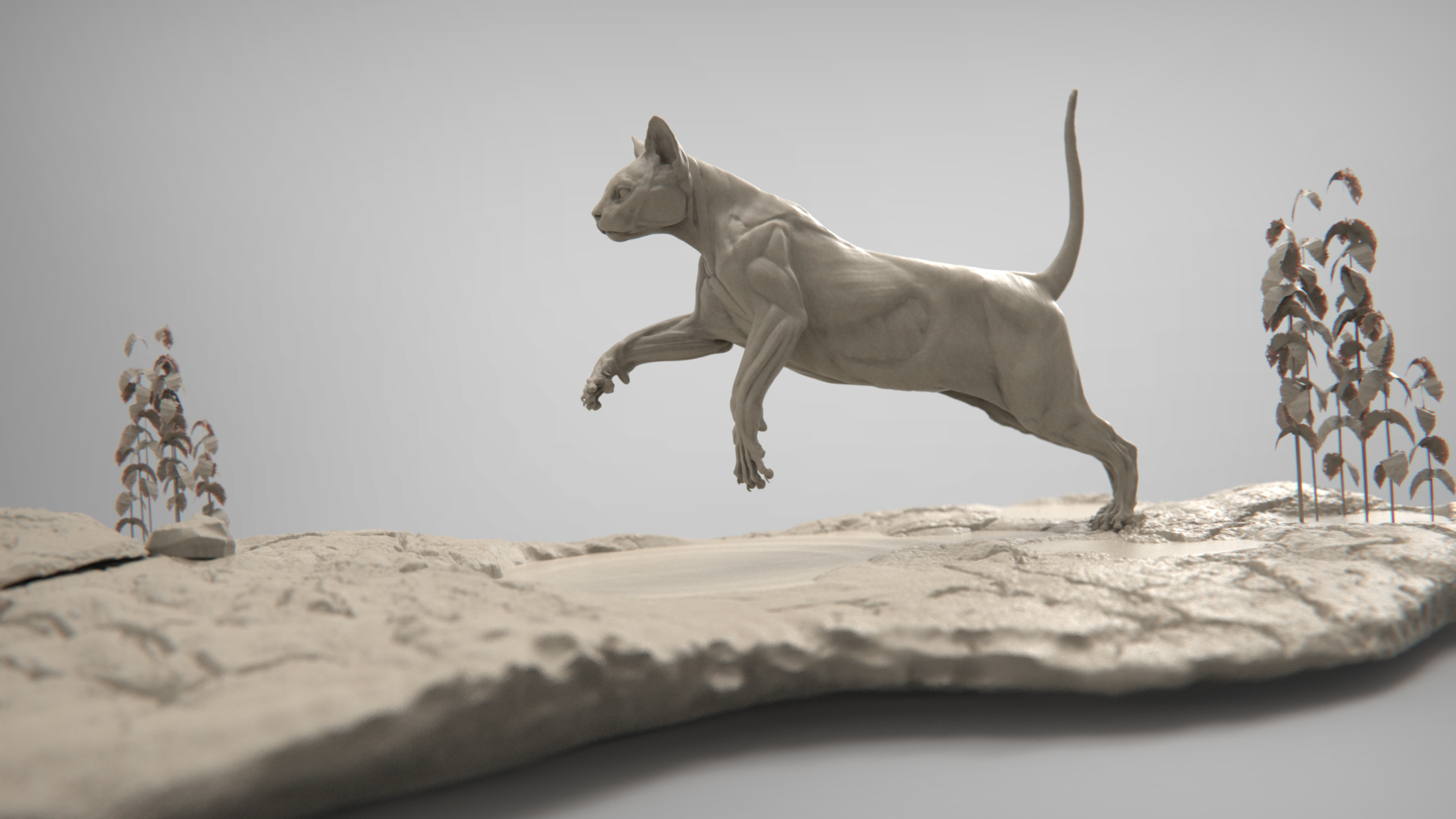 MarcusTrolldenier_SculptingAnatomy_week4_domestic_cat_05.jpg