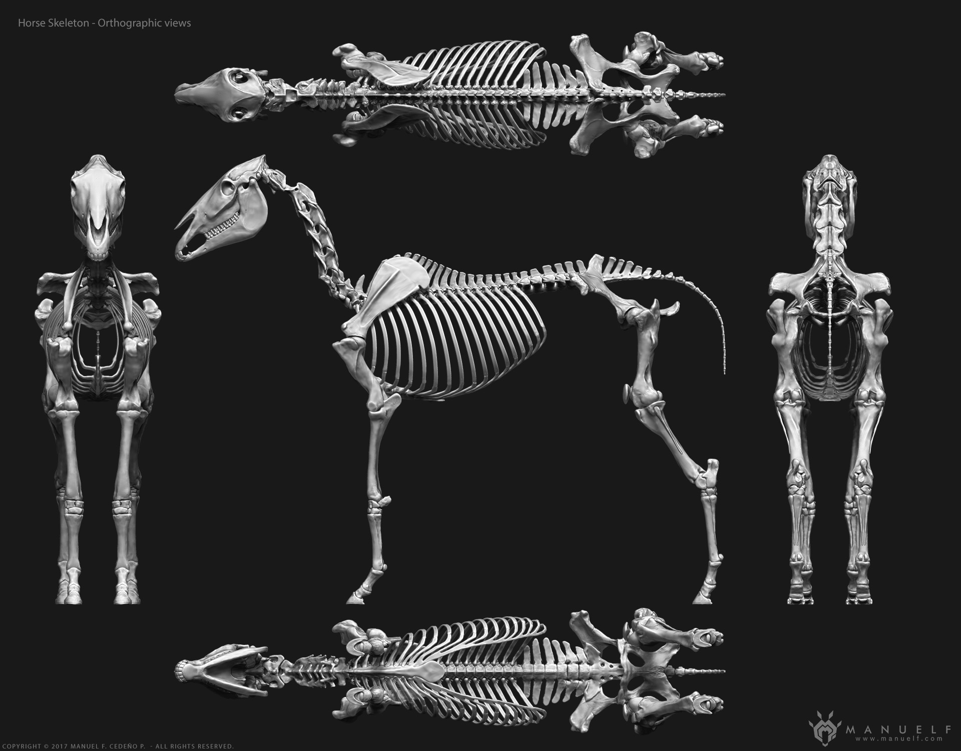 manuelf3d_Horse_Skeleton_3d_OrthographicViews.jpg