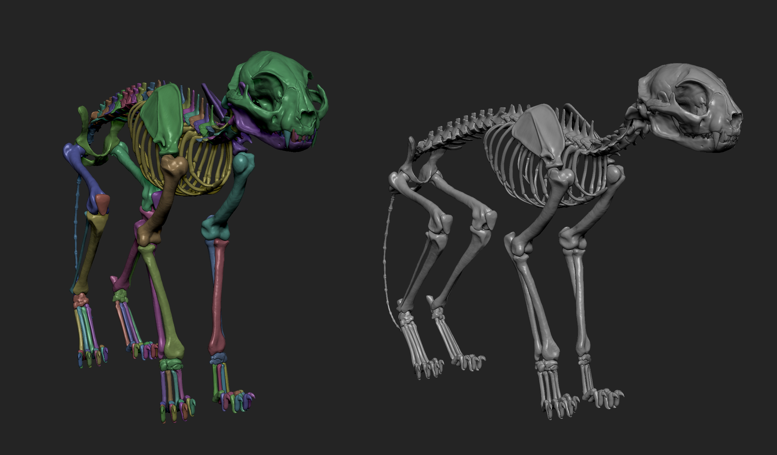 MarcusTrolldenier_SculptingAnatomy_week3_domestic_cat_03.jpg