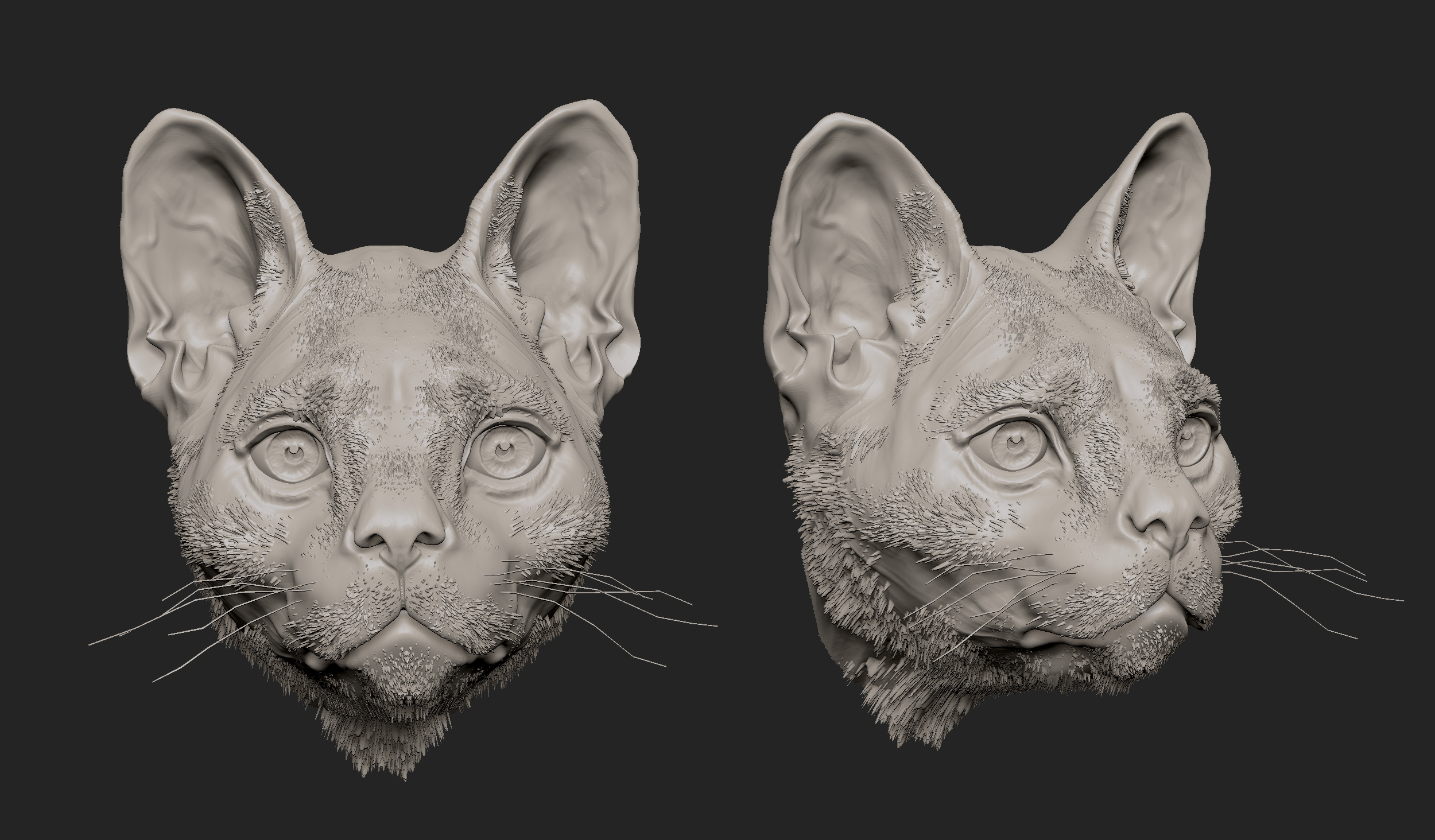 MarcusTrolldenier_SculptingAnatomy_week6_domestic_cat_05.jpg