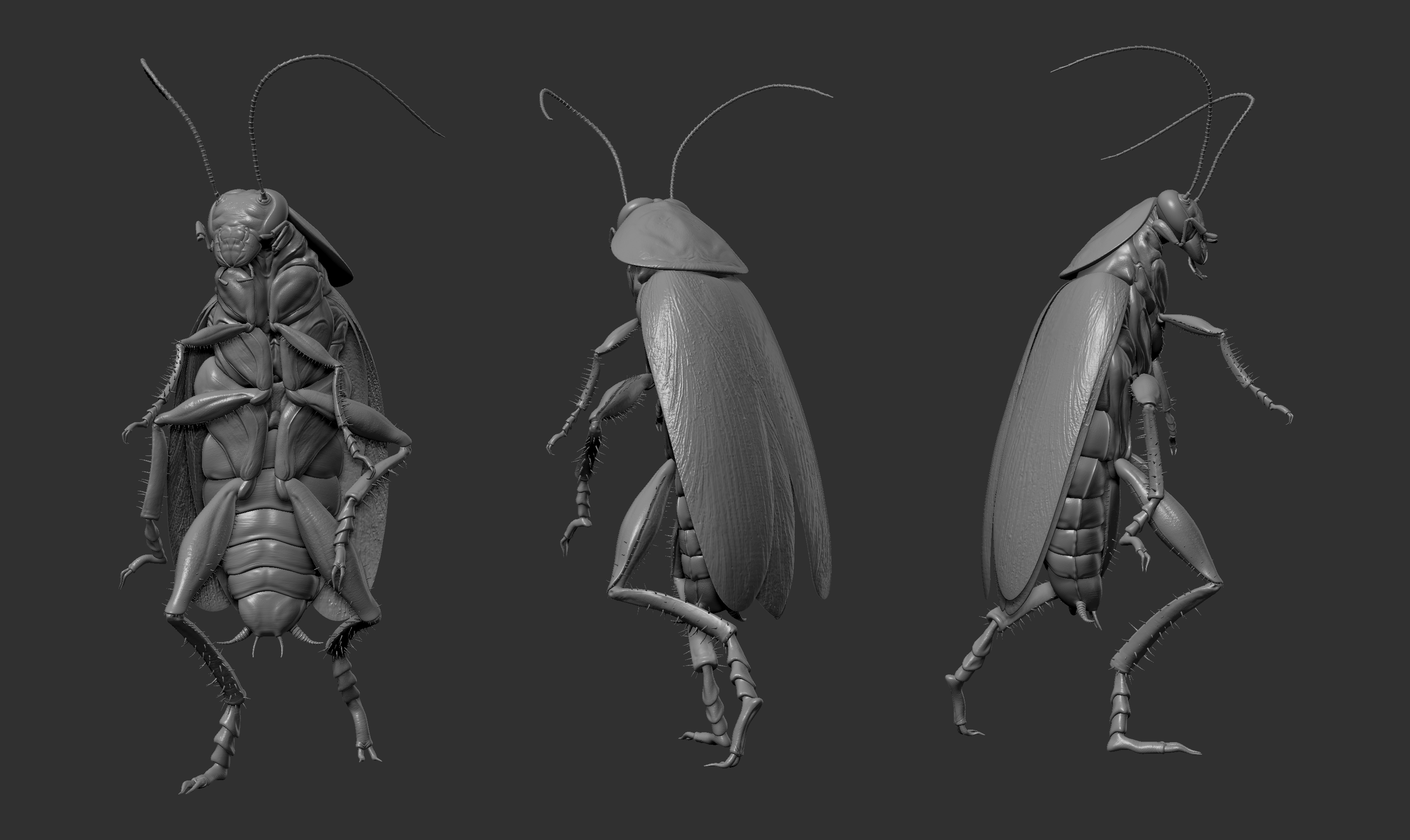Cockroach-sculpture-01.jpg