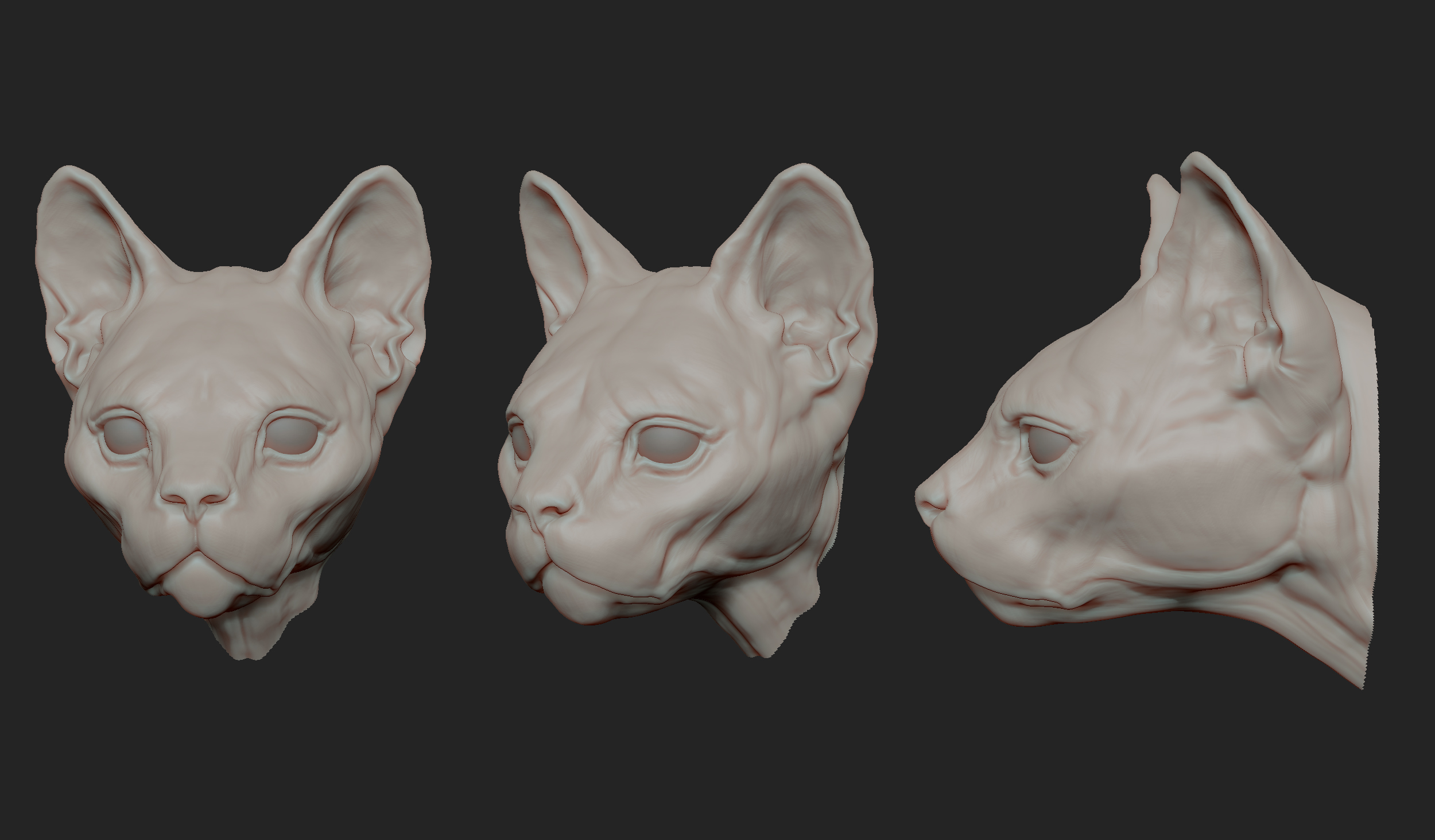 MarcusTrolldenier_SculptingAnatomy_week4_domestic_cat_01.jpg