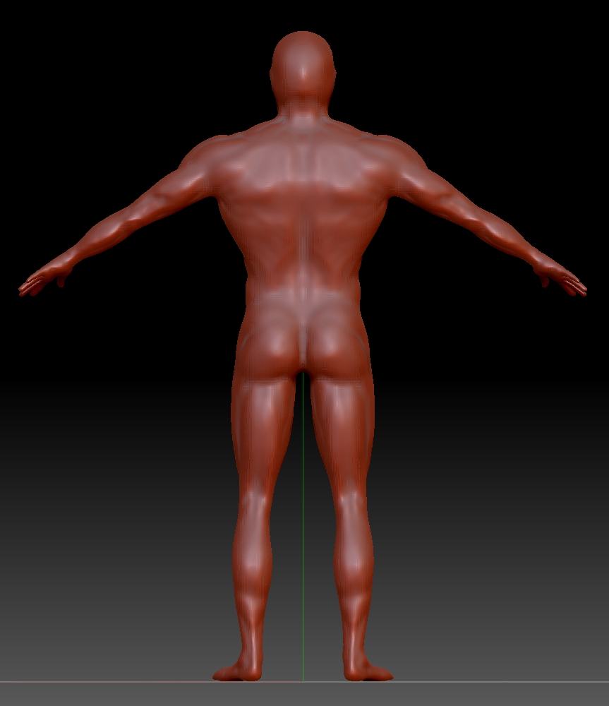 human_male_ideal_v2_back.jpg