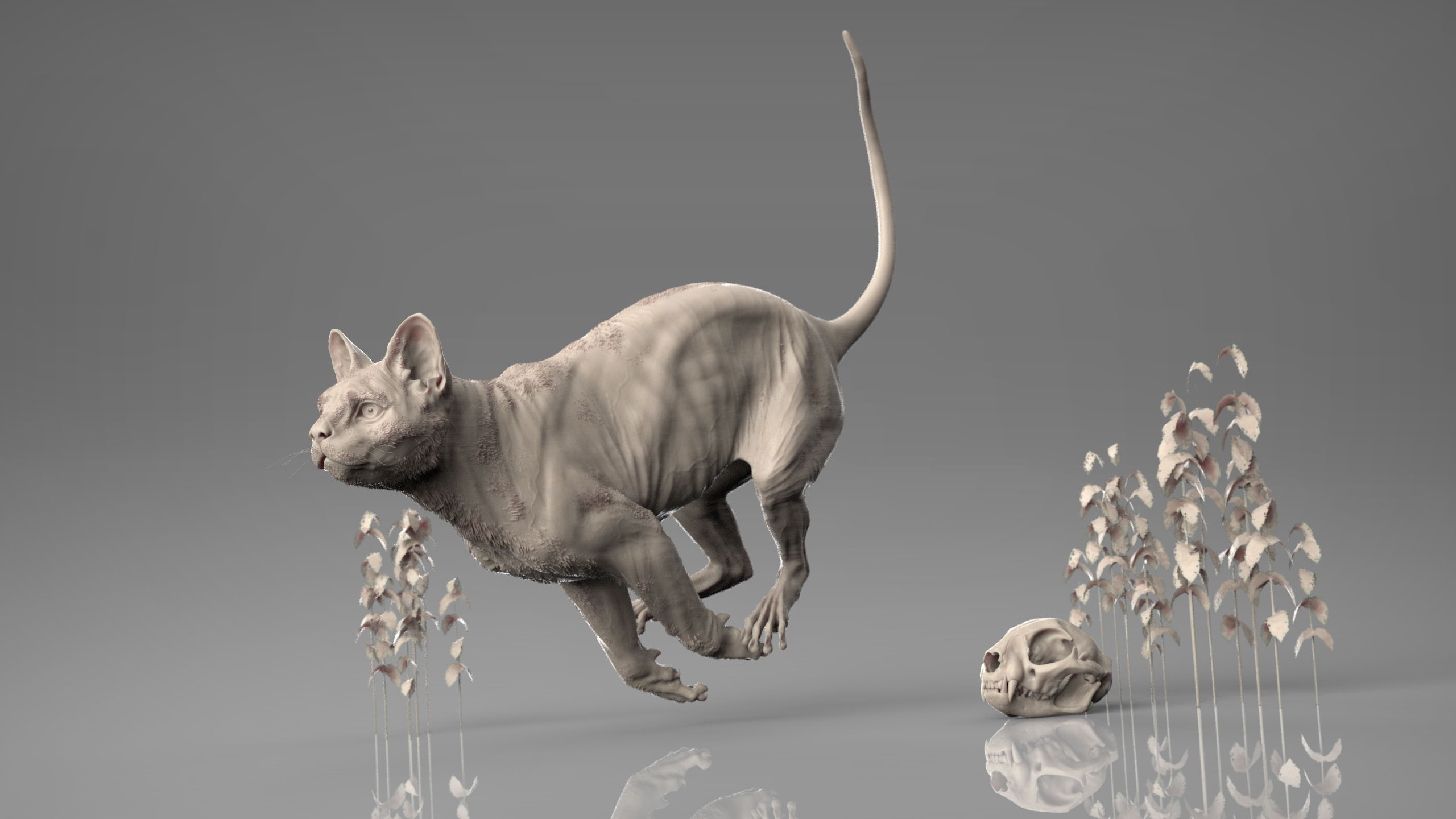 MarcusTrolldenier_SculptingAnatomy_week6_domestic_cat_01.jpg