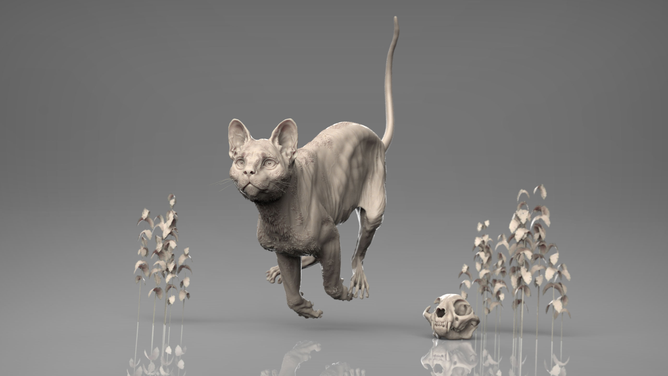 MarcusTrolldenier_SculptingAnatomy_week6_domestic_cat_03.jpg