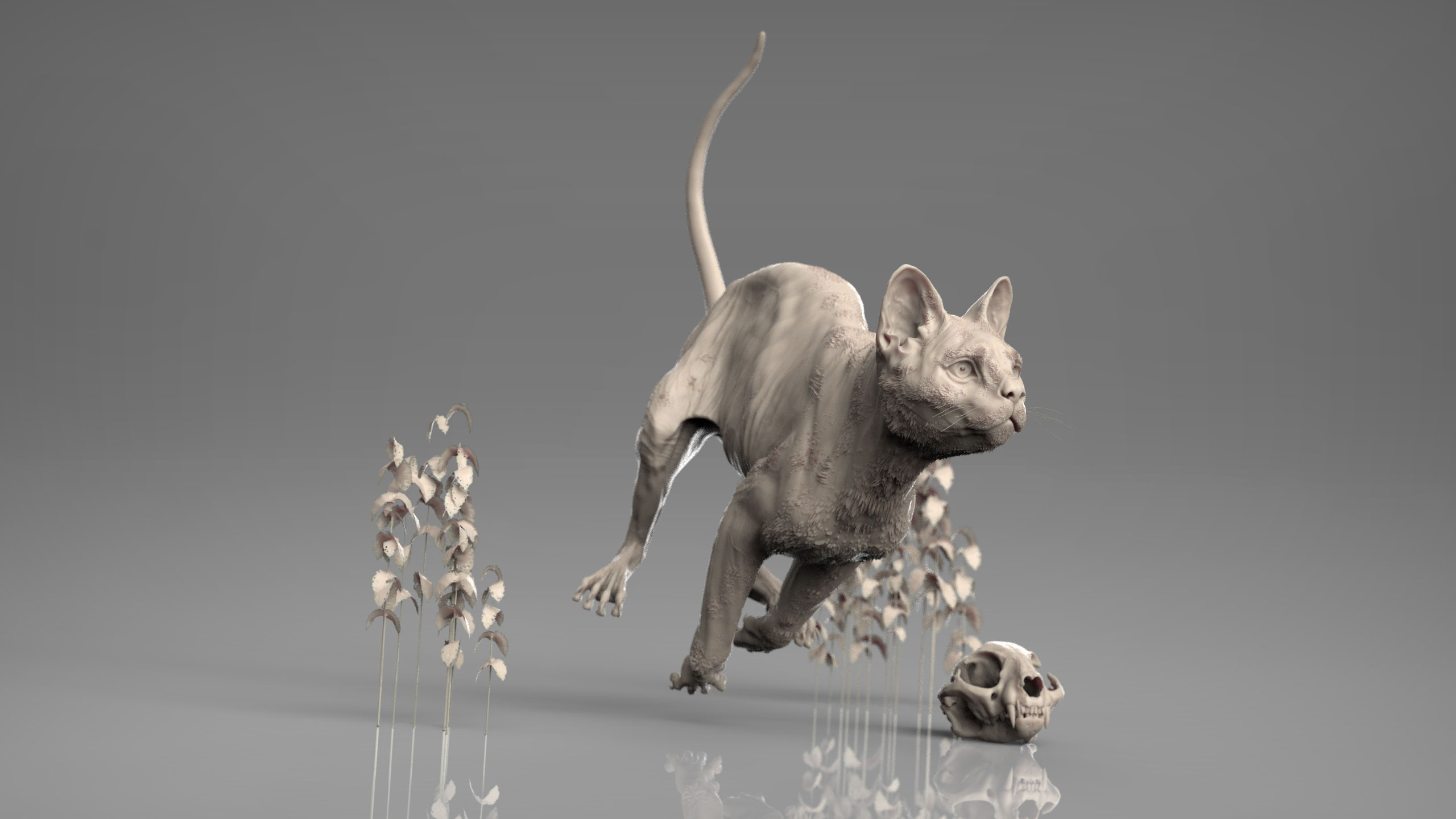 MarcusTrolldenier_SculptingAnatomy_week6_domestic_cat_02.jpg