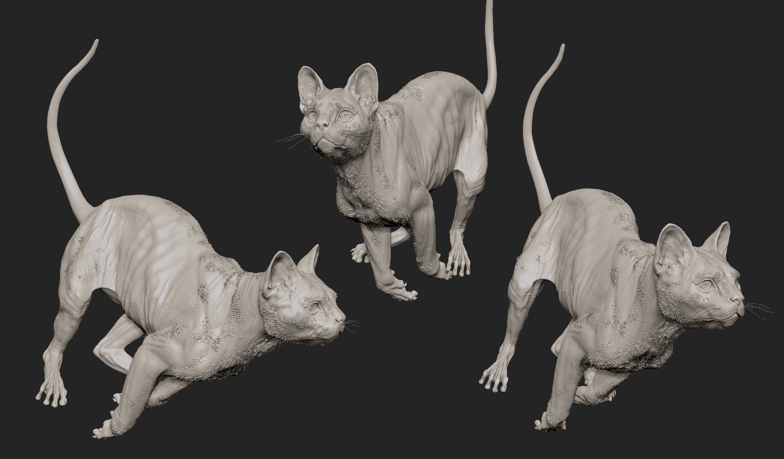MarcusTrolldenier_SculptingAnatomy_week6_domestic_cat_04.jpg