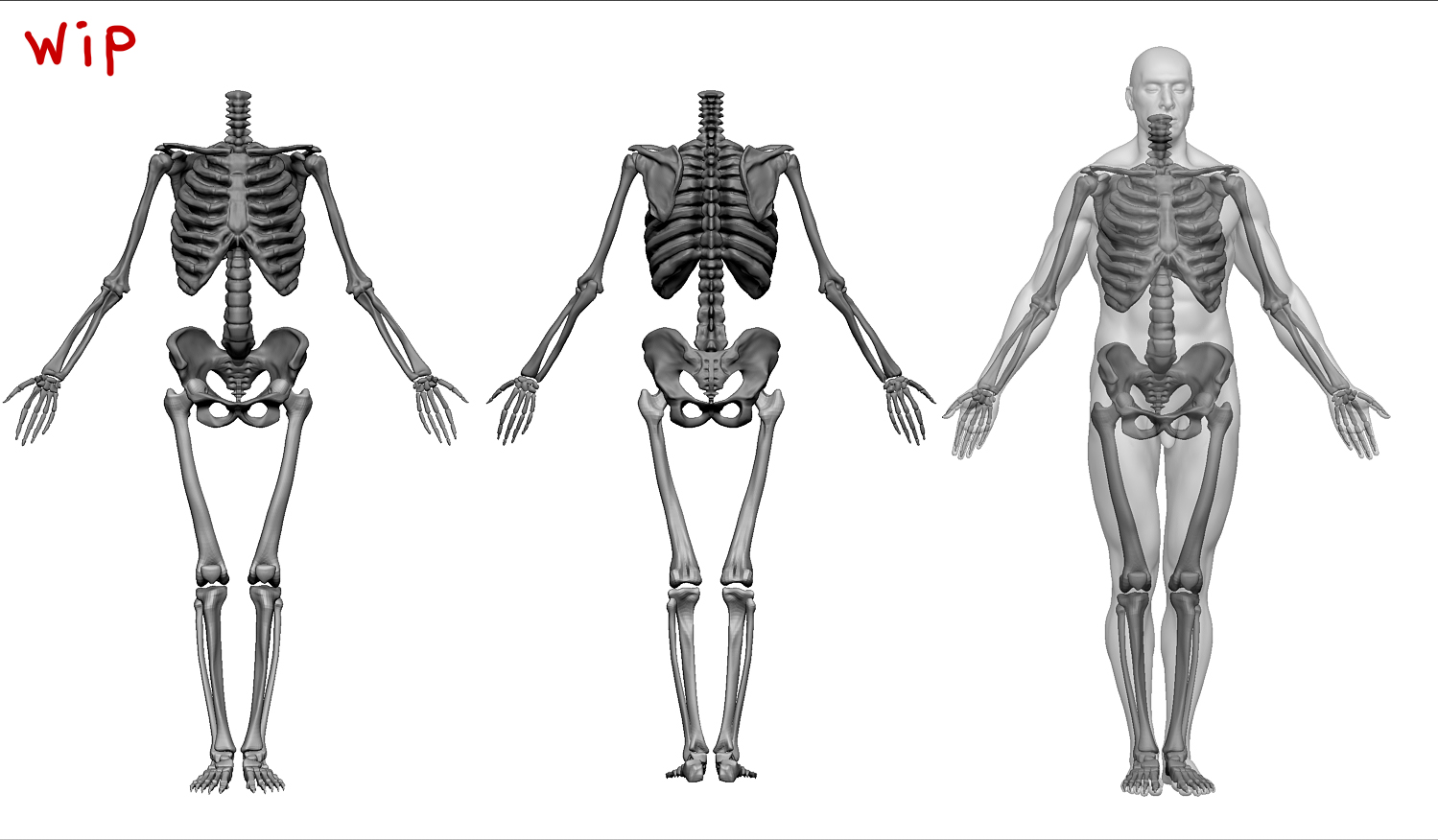 anatomy-final-skeleton.jpg