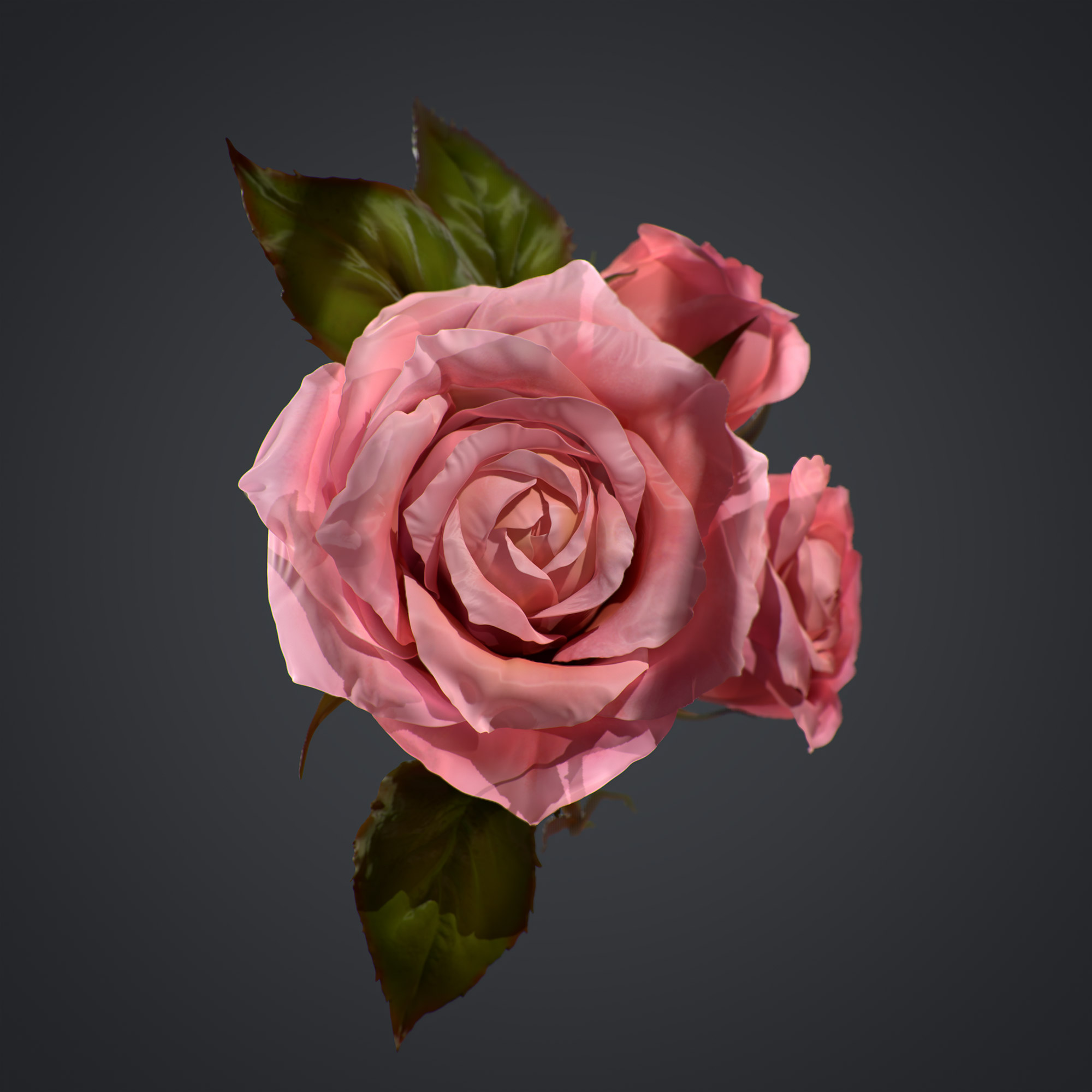 rose_2_002_small