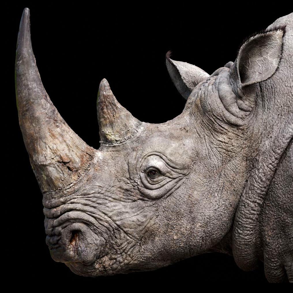 State of the Rhino | International Rhino Foundation